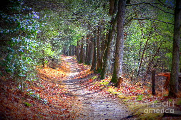 Photograph - Secret Pathway 1 by Cynthia Mask