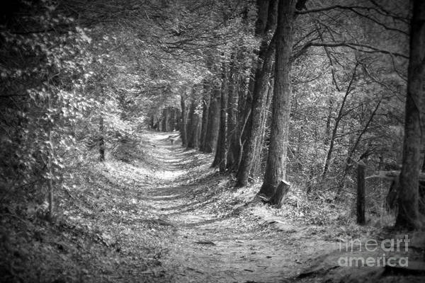 Photograph - Secret Pathway by Cynthia Mask