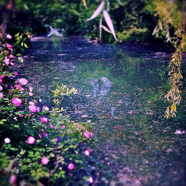Photograph - Secret River by HweeYen Ong