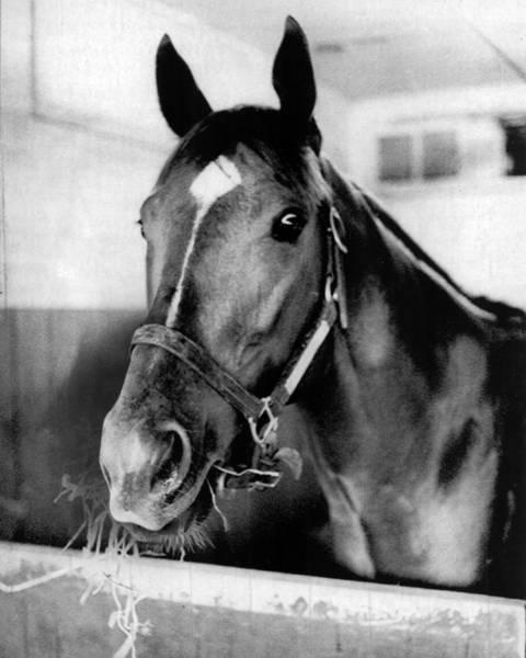 Triples Photograph - Secretariat Vintage Horse Racing #18 by Retro Images Archive