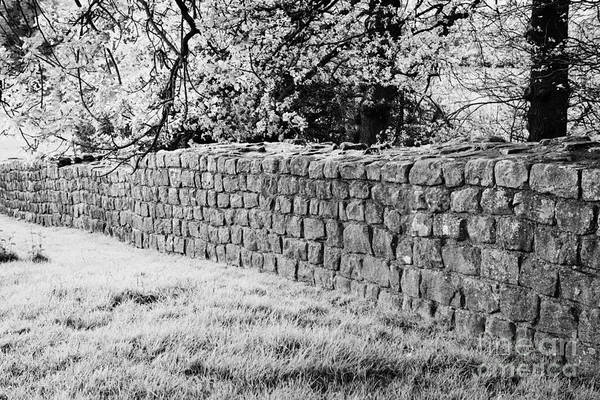 Hadrians Wall Photograph - Section Of Hadrians Wall At Low Brunton Northumberland Uk Built By The 20th Legion by Joe Fox
