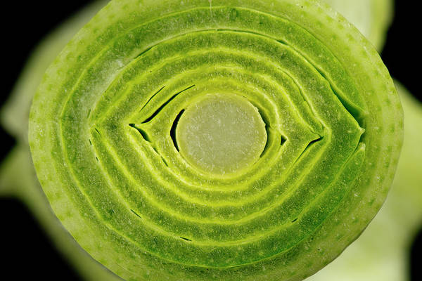 Wall Art - Photograph - Section Of Leek Stem by Nigel Cattlin