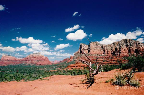 Photograph - Sedona Desert Scene by Byron Varvarigos