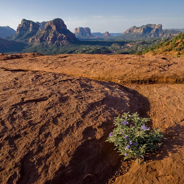 Photograph - Sedona by Ryan Heffron