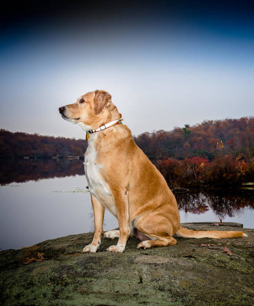 Wall Art - Photograph - Sedona - Wonder Dog by Jim DeLillo
