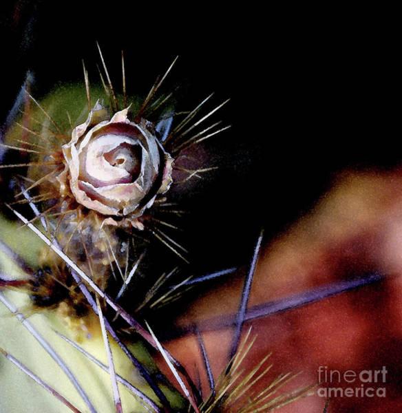 Photograph - Sedona's Desert Rose by Linda Shafer