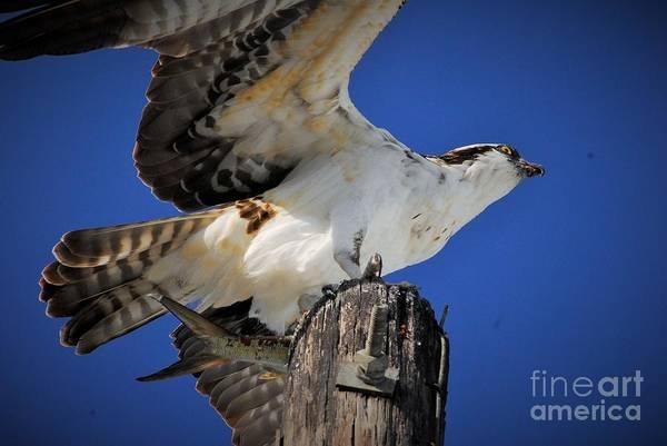 Fish Eagle Photograph - See Ya by Quinn Sedam