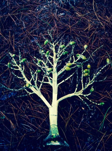 Seeded Tree's Art Print
