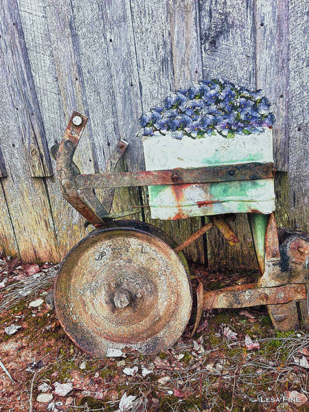 Photograph - Seeder And Pansies by Lesa Fine