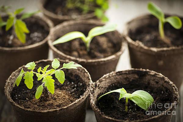 Gardening Photograph - Seedlings  by Elena Elisseeva