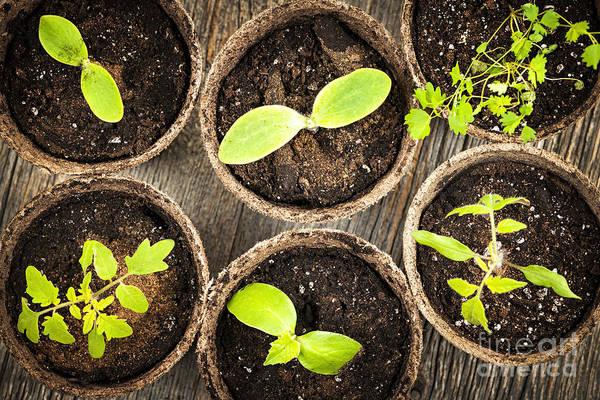Six Wall Art - Photograph - Seedlings Growing In Peat Moss Pots by Elena Elisseeva