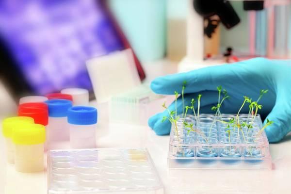 Modified Photograph - Seedlings In Laboratory by Wladimir Bulgar
