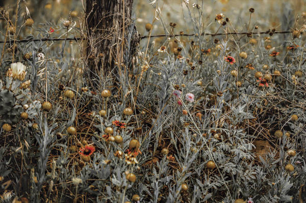 Fence Post Digital Art - Seeing Orange by Nita G Leckenby