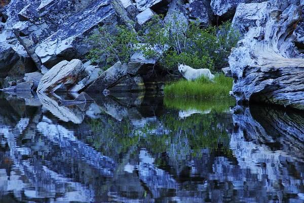 Photograph - Sekani Wild by Sean Sarsfield