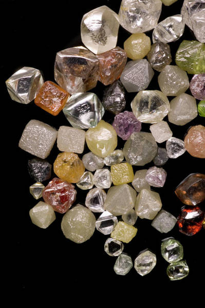 Uncut Photograph - Selection Of Diamonds by Natural History Museum, London/science Photo Library