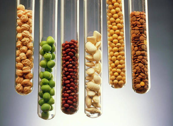 Pulse Photograph - Selection Of Pulses Presented In Test Tubes by Oscar Burriel/science Photo Library