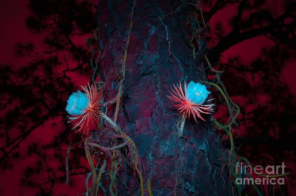 Blooming Tree Mixed Media - Selenicereus Blossoms At Night by Shawn  Bowen