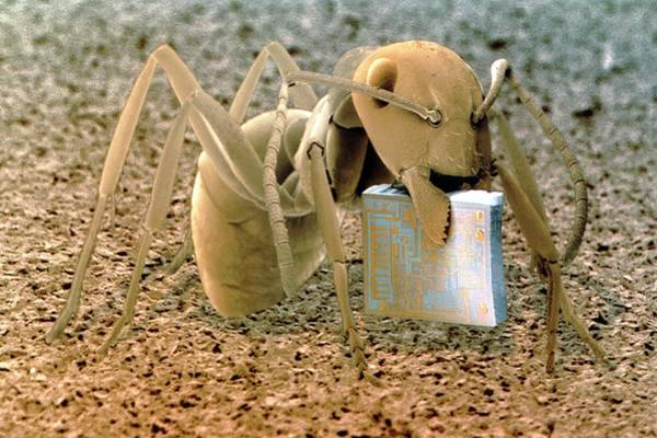Wall Art - Photograph - Sem Of Ant Holding A Microchip by Power And Syred