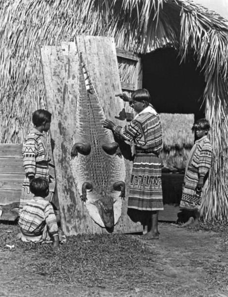 Florida Alligator Photograph - Seminole Dries Alligator Skin by Underwood Archives