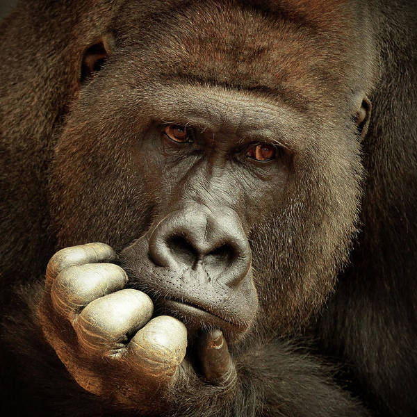 Primate Photograph - Sense Of Life ... by Antje Wenner-braun