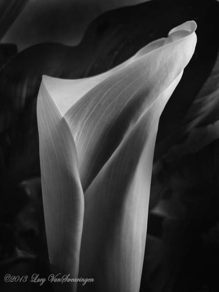 Photograph - Sensuous Calla by Lucy VanSwearingen