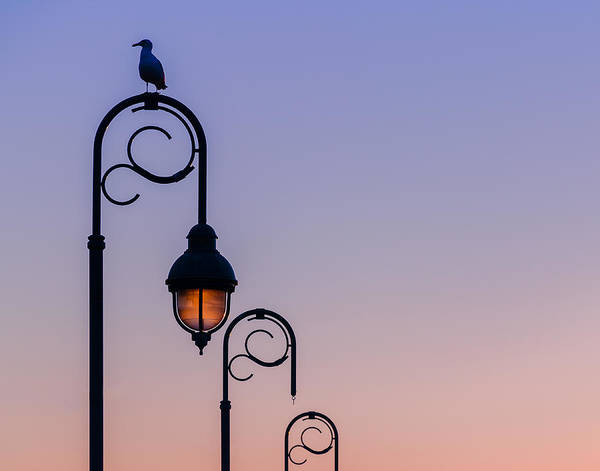 Photograph - Sentinel At Sunset by Steve Stanger