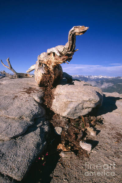 Dinosaur National Park Photograph - Sentinel Dome Dinosaur by George Oze