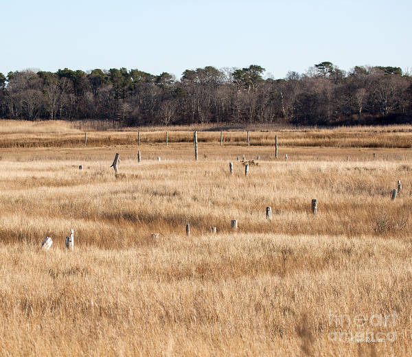 Photograph - Sentinels by Michelle Constantine