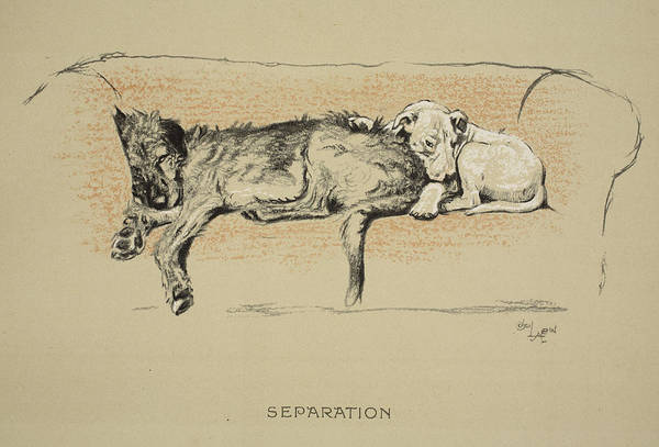 Hound Drawing - Separation, 1930, 1st Edition by Cecil Charles Windsor Aldin