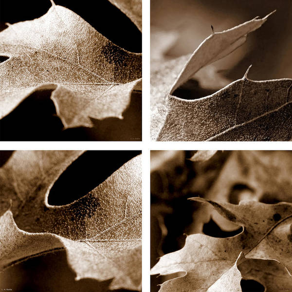 Photograph - Sepia Leaf Collage by Lauren Radke