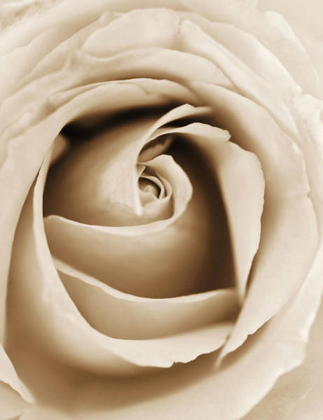 Photograph - Sepia Rose by Marilyn Hunt