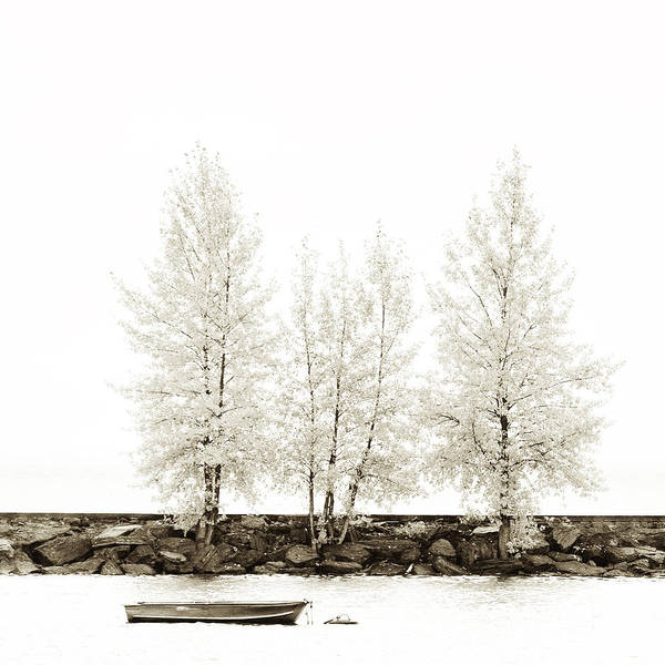 Photograph - Sepia Square Diptych Tree 12-7693 Set 1 Of 2 by U Schade