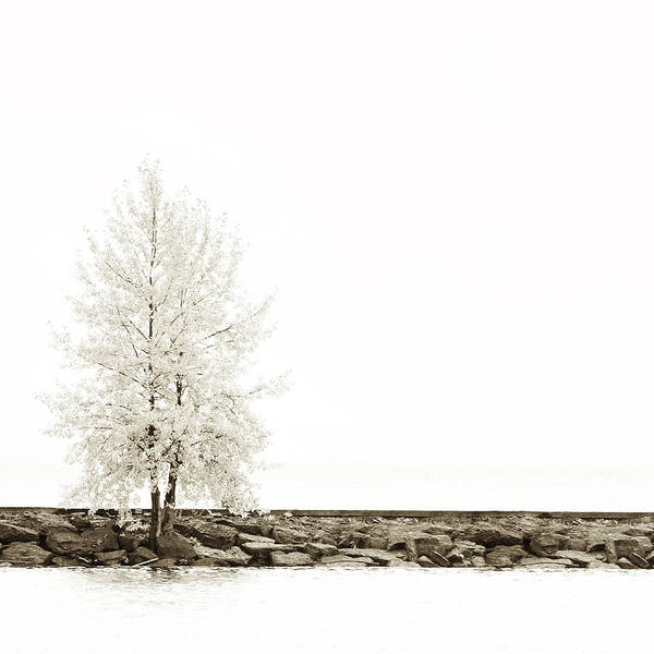 Photograph - Sepia Square Diptych Tree 12-7693 Set 2 Of 2 by U Schade