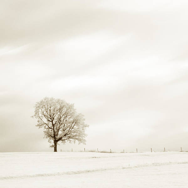 Photograph - Sepia Square Diptych Tree 13-0747 Set 1 Of 2 by U Schade