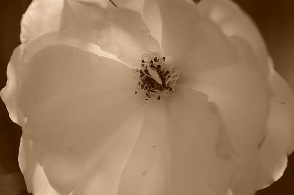 Photograph - Sepia Sunlight by Miguel Winterpacht