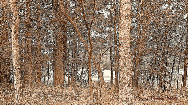 Manistee National Forest Wall Art - Photograph - Sepia Tone Trees Manistee National Forest  by Rosemarie E Seppala