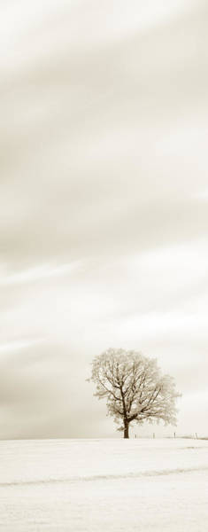 Photograph - Sepia Triptych Tree 13-0747 Set 1 Of 3 by U Schade