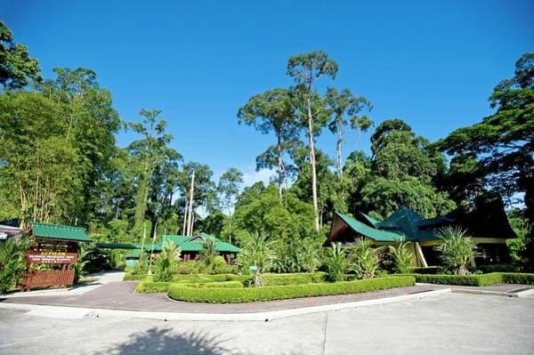 Orangutan Photograph - Sepilok Rehabilitation Centre by Tony Camacho/science Photo Library