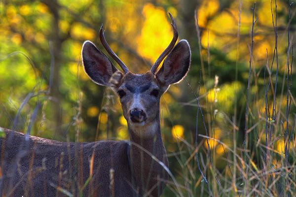Photograph - September Morning by Jim Garrison