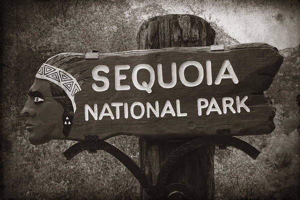 Photograph - Sequoia National Park by Songquan Deng