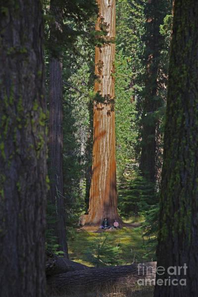 Wall Art - Photograph - Sequoia Siesta by John Stephens