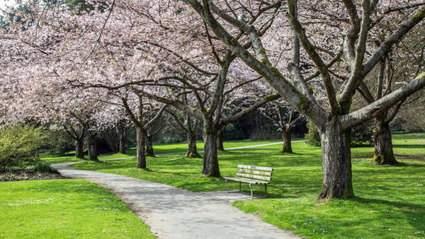Photograph - Serene Bench In Cherry Blossoms by Pierre Leclerc Photography