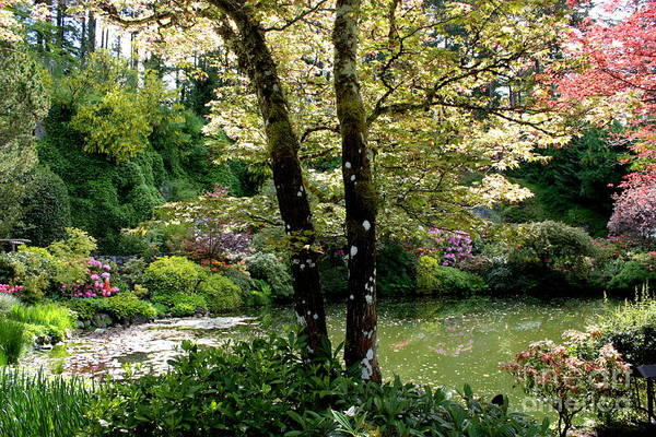 Serene Garden Retreat Art Print