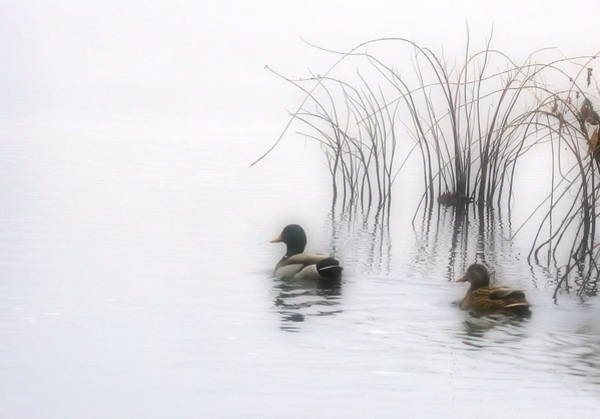 Duck Photograph - Serene Moments by Karol Livote