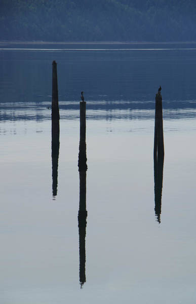 Photograph - Serene Reflections by Marilyn Wilson