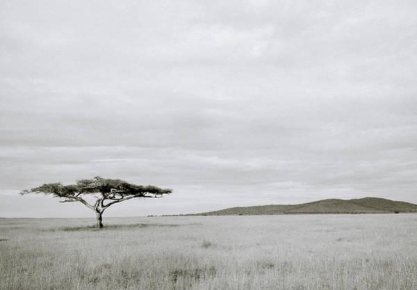 Photograph - Serengeti Acacia Tree  by Shaun Higson