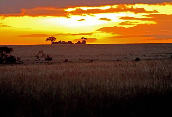 Photograph - Serengeti Dawn by Tony Murtagh