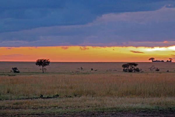 Photograph - Serengeti Sunrise by Tony Murtagh