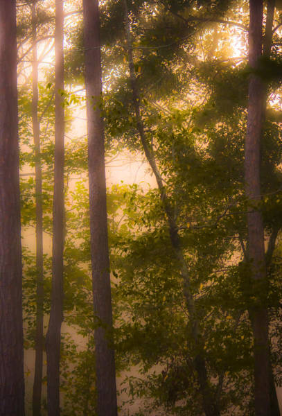 Photograph - Serenity In The Forest by Parker Cunningham