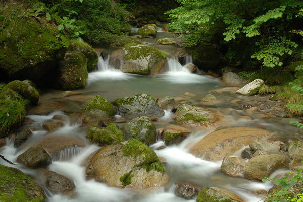 Brooks Photograph - Serenity Is A Brook by Aaron Bedell